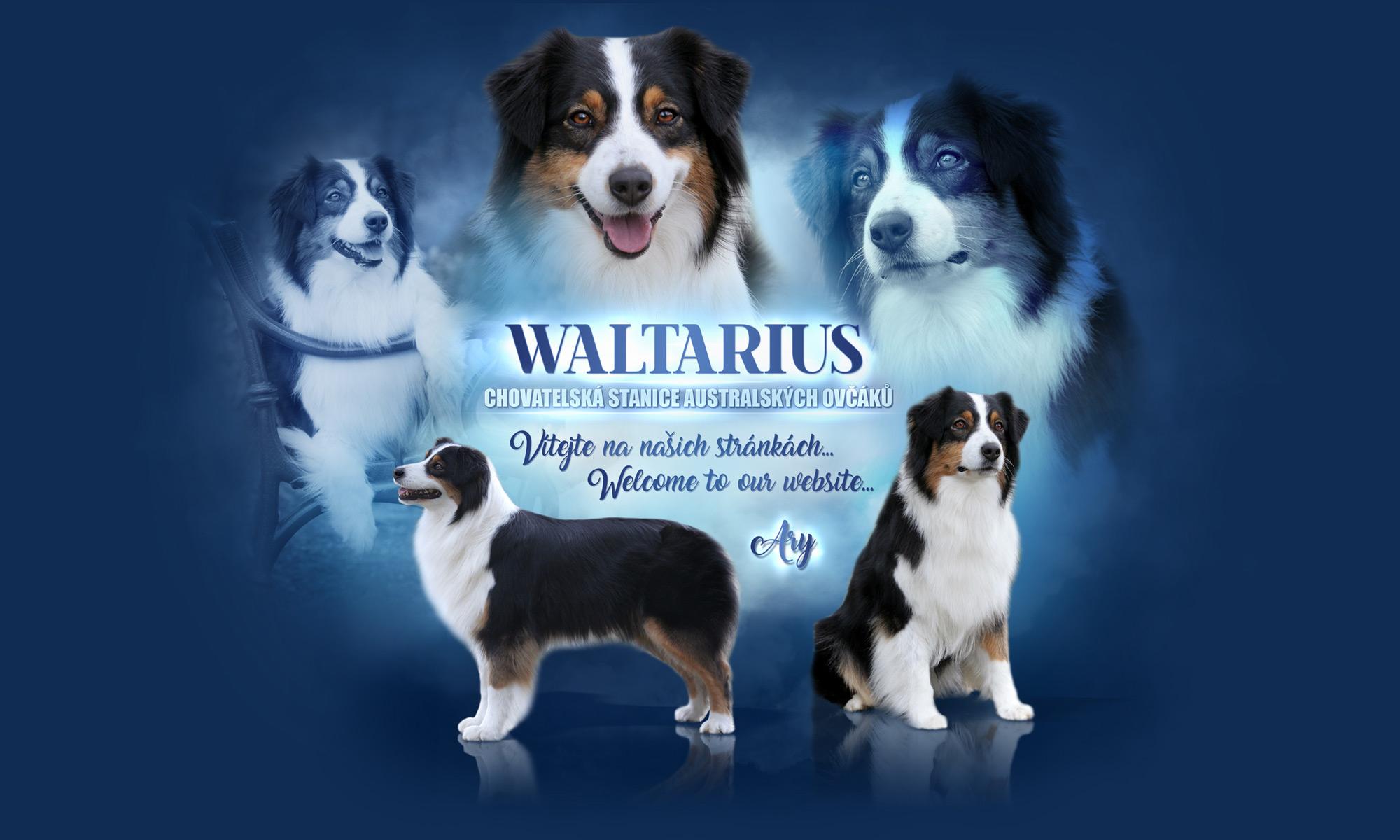 Waltarius